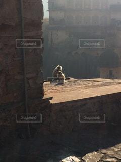 自然,猿,屋外,親子,霧,遺跡,石造り,サル,さる,おやこ,動物の親子