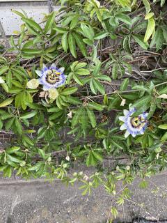 自然,花,屋外,緑,草木,フローラ