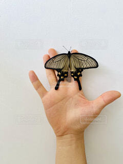 自然,動物,手,人,昆虫,蝶,蛾や蝶