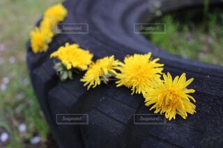 タイヤの上にタンポポのみちができましたの写真・画像素材[4620652]