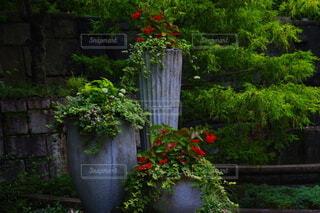 花,屋外,樹木,植木鉢,観葉植物,草木