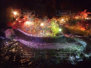 夜,紅葉,屋外,花火,葉,明るい,景観,カエデ