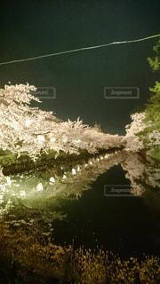花,屋外,綺麗,水面,夜桜