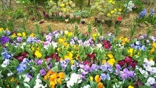 色鮮やかな花畑の写真・画像素材[4631538]