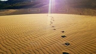 朝の鳥取砂丘の写真・画像素材[4729014]