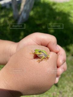 カエルと子供の写真・画像素材[4662899]