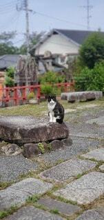 猫,風景,動物,屋外,岩,石