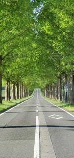 風景,公園,屋外,緑,階段,自由,樹木,道,草木,眺め,メタセコイア並木