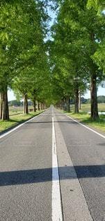 風景,屋外,自由,樹木,道,草木,眺め,メタセコイア並木