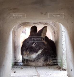 動物,うさぎ,かわいい,たくさん,ふれあい,ウサギ,野うさぎ,月うさぎの里