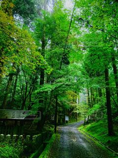 自然,屋外,樹木,山林,比叡山