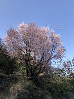 空,花,屋外,樹木,草木