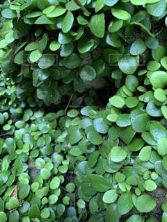 自然,屋外,緑,水面,グリーン,カラー,草木,水生植物