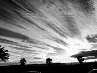 風景,空,屋外,雲,モノクロ,樹木,ヤシの木,黒と白