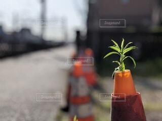 三角コーンからの草の写真・画像素材[4646874]