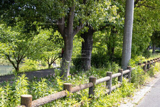 公園,花,屋外,草,樹木,フェンス,墓,墓地,ガーデン