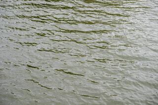 屋外,湖,水面