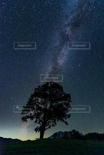 自然,空,夜,屋外,星,樹木,天の川,星座,銀河,夏の夜空,天文学