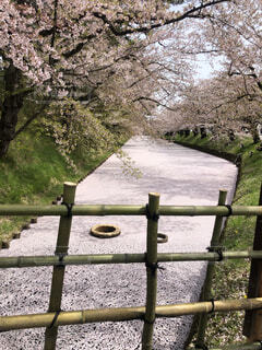 公園,花,春,屋外,湖,ベンチ,水面,樹木,フェンス,草木