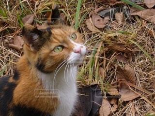 猫,自然,動物,屋外,草,野生