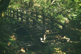 橋,木,緑,川,山,架け橋