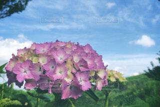 自然,空,花,緑,青空,田舎,紫陽花