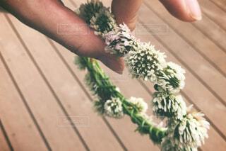 シロツメクサの花冠の写真・画像素材[4626710]
