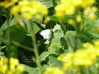 花,動物,屋外,緑,昆虫,蝶,草木,花粉媒介,蛾や蝶