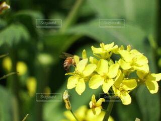 花,動物,蜂,昆虫,草木