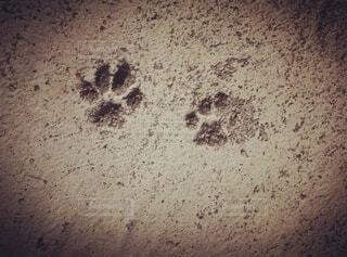 コンクリートに残されたねこの足あとの写真・画像素材[4633007]