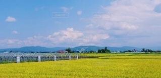 自然,風景,空,屋外,雲,晴れ,青空,晴天,北海道,田舎,稲穂,山,景色,大地,田園,稲,眺望,畑,田園風景,眺め,稲作