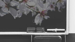 黒板と桜の写真・画像素材[4662536]