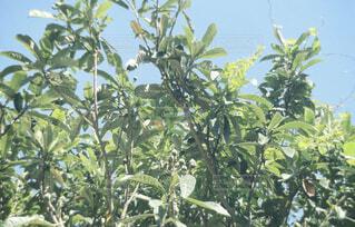 空,屋外,晴れ,果物,樹木,初夏,summer,草木