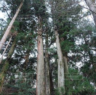 空,秋,森林,木,屋外,山,樹木,トランク,草木,上