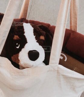 犬,動物,ぬいぐるみ,上目遣い,トートバッグ,ショッピング