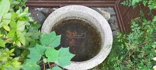 屋外,景色,草,日本,草木,水鉢,ガーデン