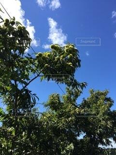 空,屋外,雲,青い空,樹木,草木,栗の木
