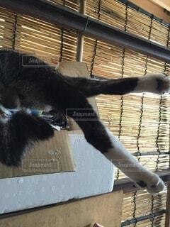 猫,動物,足,黒