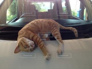 猫,動物,屋内,窓,オレンジ,子猫