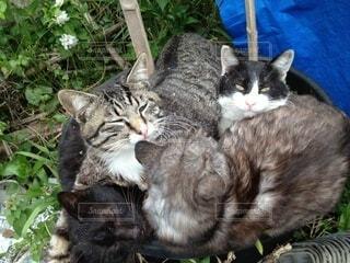 猫,動物,屋外,景色
