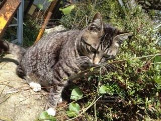 猫,動物,屋外,かわいい