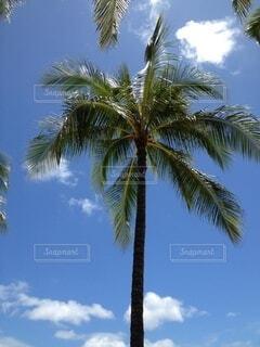 空,屋外,雲,樹木,ヤシの木,ココナッツ,草木,パーム,ヤシ目,ダイオウヤシ