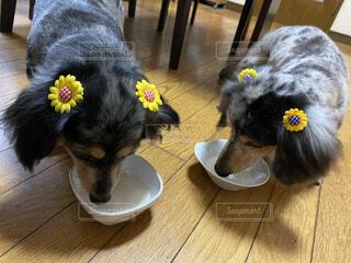 動物,ペット,愛犬