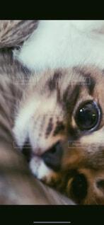猫,動物,屋内,かわいい,景色,ペット,子猫,目,つぶらな瞳,マイペット,愛おしい,ネコ科,探す,ドアップ,彼女目線,愛猫家,可愛すぎる猫,愛おしい家族