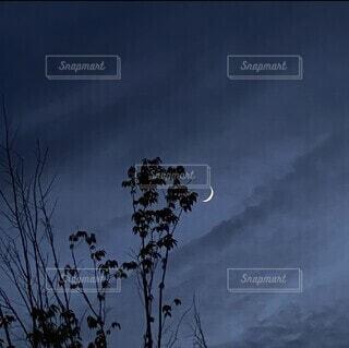 自然,空,夜空,屋外,雲,暗い,霧,樹木,月,くもり,日中