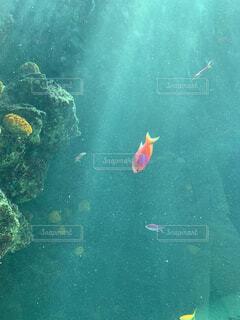 動物,魚,屋外,水族館,水面,葉,泳ぐ,オレンジ,光,水中,水槽,深海,日中,海洋無脊椎動物,海洋生物学,浅海