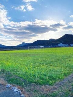 自然,風景,空,花,屋外,雲,山,景色,草,草木