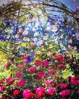 花,夜,夜空,屋外,赤,カラフル,グラフィック,静寂,幻想的,バラ,アート,光,薔薇,美しい,キラキラ,デザイン,ファンタジー,レッド,カラー,草木,ガーデン