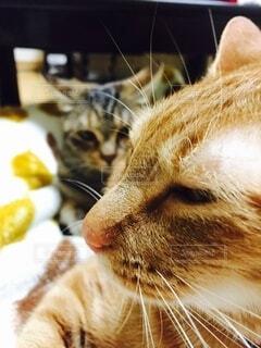 猫,動物,可愛い,ネコ科