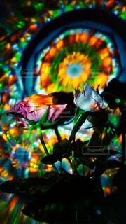 花,部屋,カラー